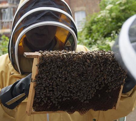 Edu. Bees tab